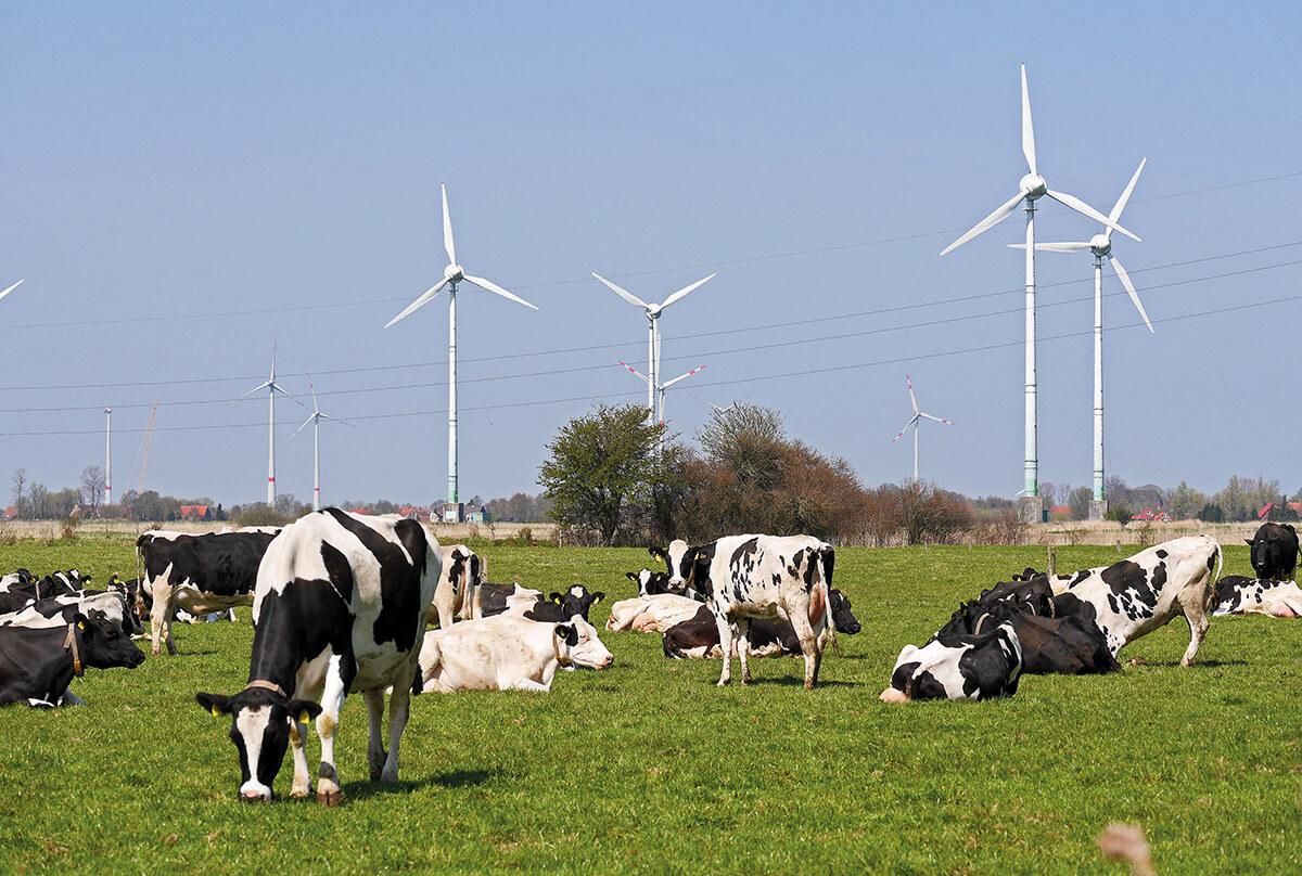 Vacas lecheras de Frisia oriental (Alemania) Foto: Derich Westendarp